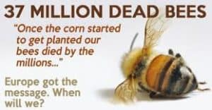 dead bees message