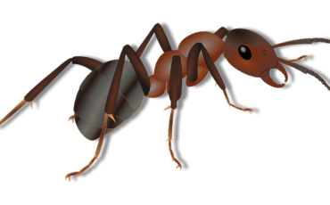 Indoor Ant Treatment Using Crawling Insect Control