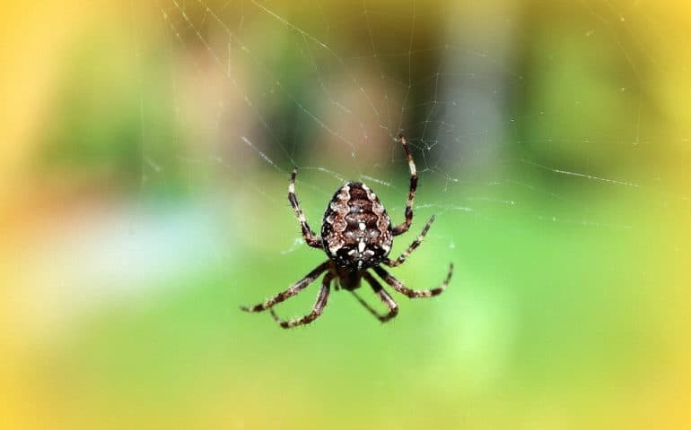 Diatomaceous Earth Natural Spider Repellent